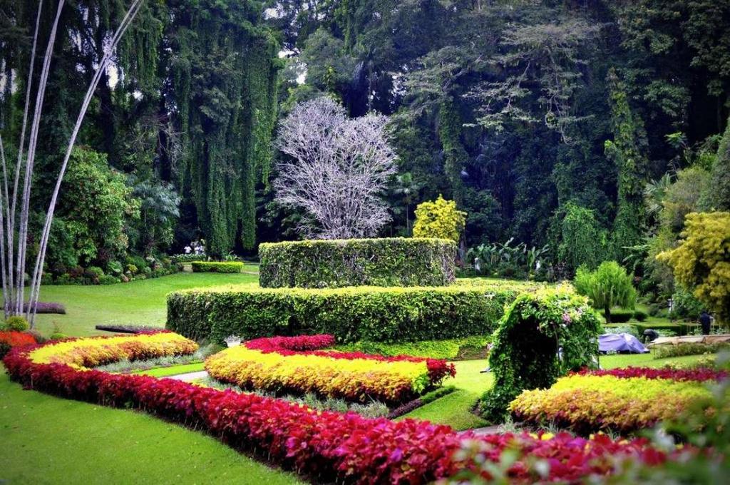 Королевский ботанический сад Эдинбурга.jpg