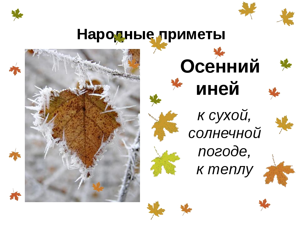 Народные приметы о погоде осенью