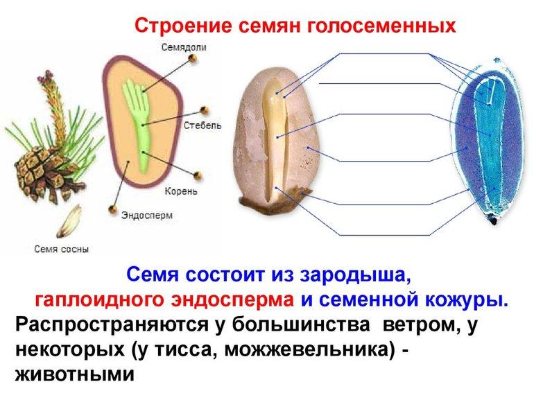 osobennosti_razmnozheniya.jpg