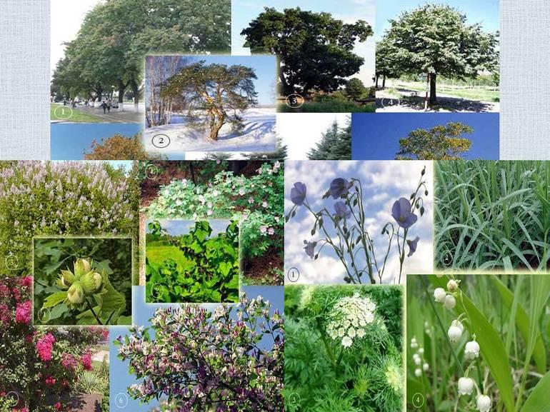 Виды растений 🌸 разнообразие, классификация с примерами, систематические группы растений, схема царства растений, особенности и характеристика