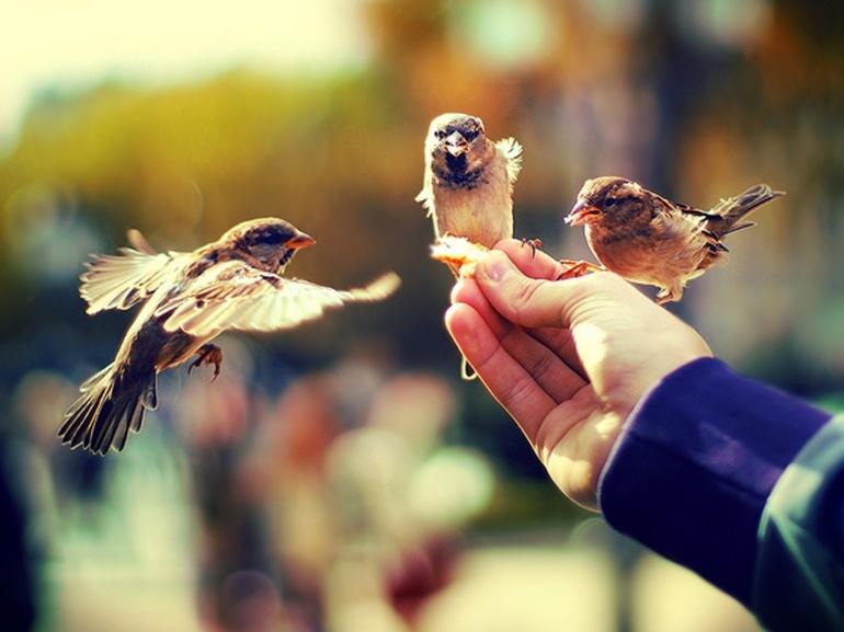 Птицы и люди