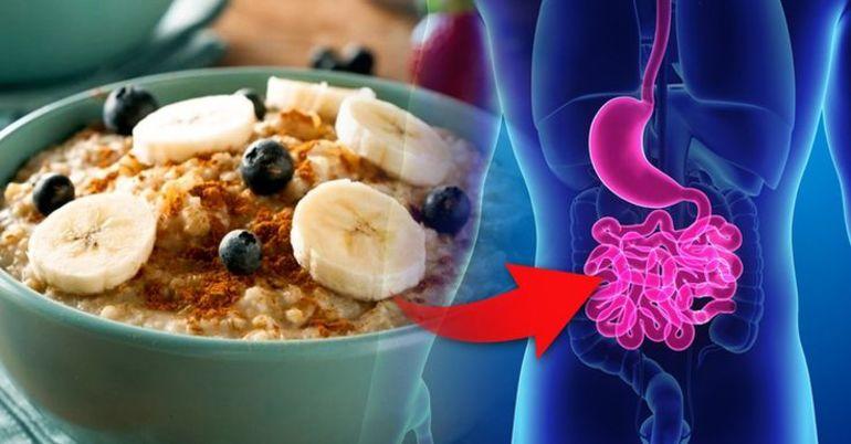 Пища в кишечнике