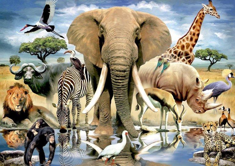 Сообщение классу о животных разных групп