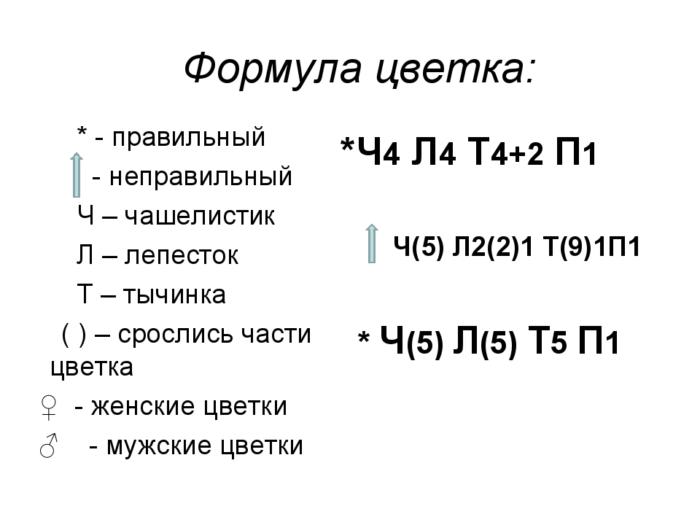 Рис. 4. Формулы цветка