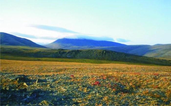 Рис. 1. Арктическая тундра на острове Врангеля