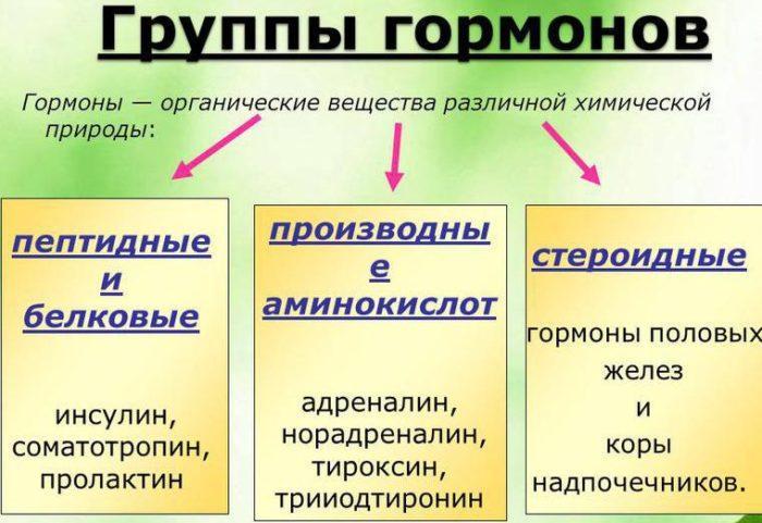 Рис. 1. Группы гормонов