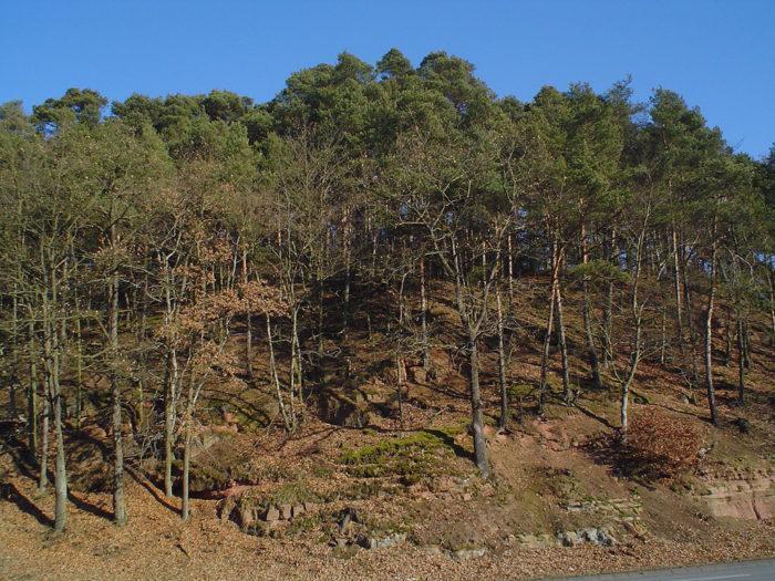 Рис. 3. Елово-буковый лес около Марбурга. Германия
