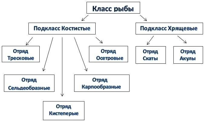 Рис. 1. Классификация рыб