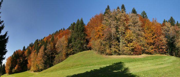 Рис. 5. Осенний смешанный лес в Форарльберге. Австрия