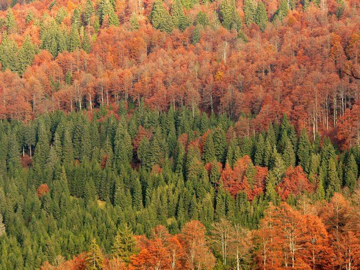 Рис. 4. Осенний смешанный лес. Север Италии