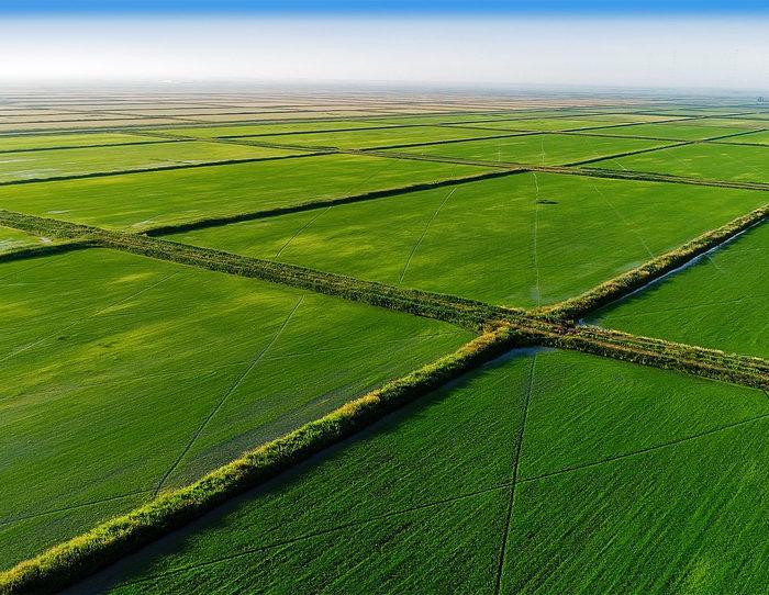 Рис. 3. Рисовые поля Кубани