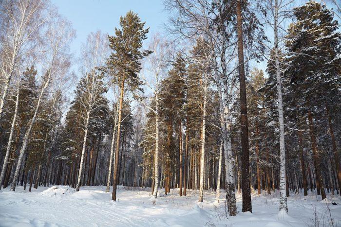 Рис. 1. Смешанный лес Среднего Урала