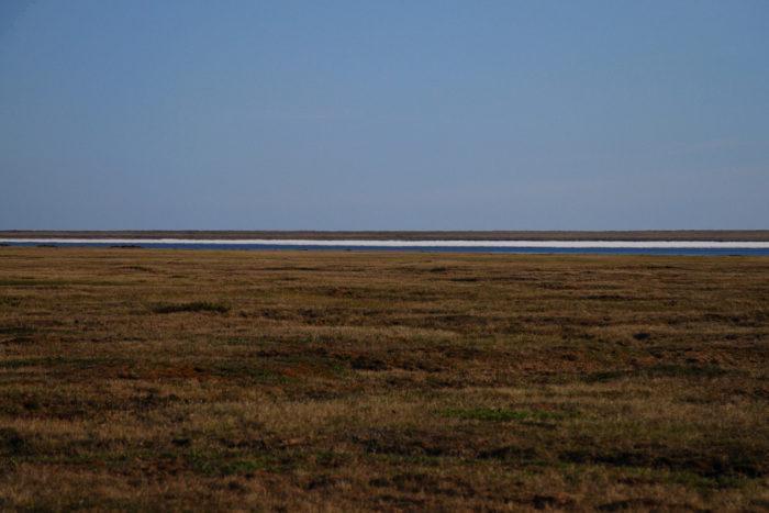 Рис. 3. Тундра на Аляске в июле