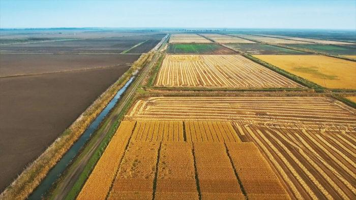 Рис. 5. Уборка риса в Краснодарском крае