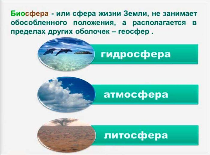 Рис. 1. Биосфера