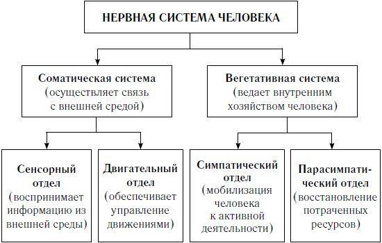 Рис. 1. Нервная система человека