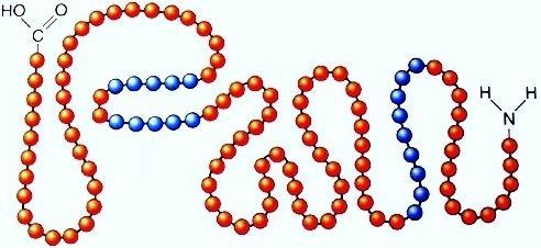 Рис. 1. Первичная структура белка