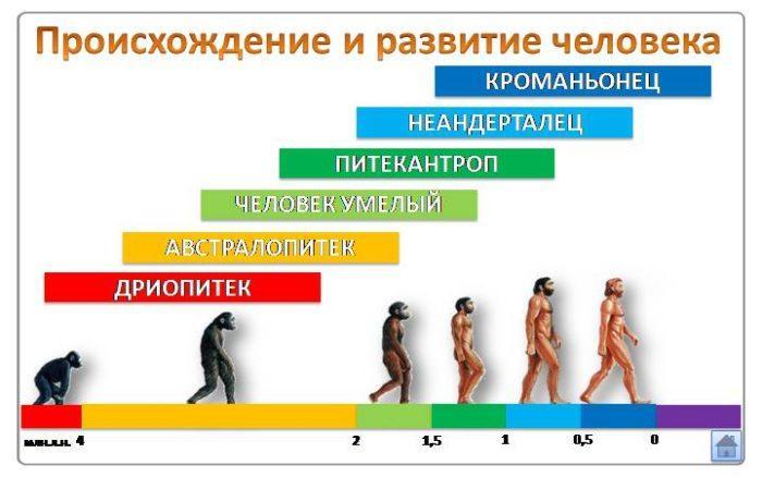 Рис. 1. Происхождение и развитие человека