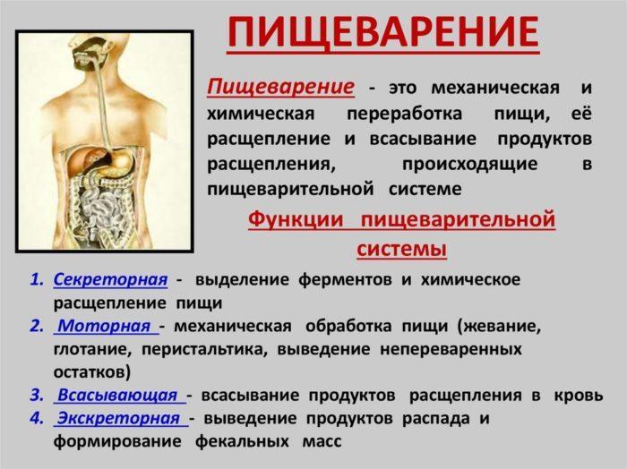 Рис. 1. Функции пищеварительной системы