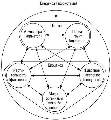 Рис. 1. Экотоп и Биоценоз - схема, предложенная Сукачевым