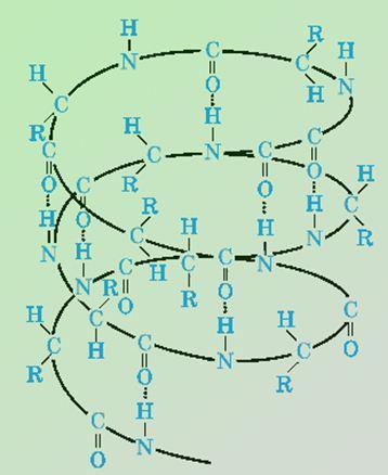 Рис. 2. Альфа-спираль