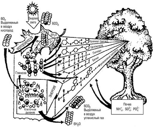 Рис. 2. Пример продуцента и его деятельности