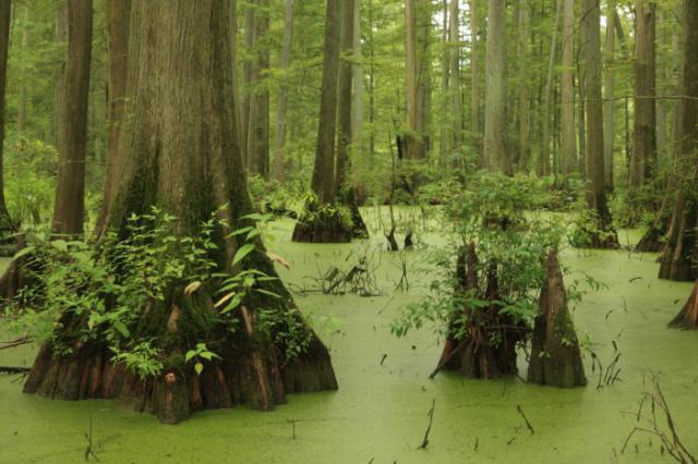 Рис. 2. Зона смешанных и широколиственных лесов