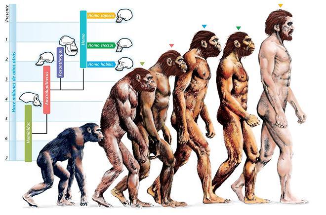 Рис. 2. Теория происхождения видов Чарльза Дарвина