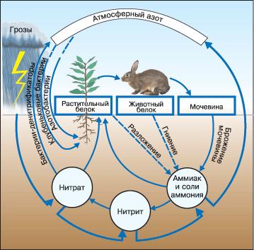 Рис. 3. Круговорот водорода в природе