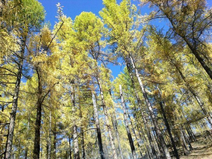 Рис. 3. Осенняя тайга в горах Восточных Саян. Бурятия