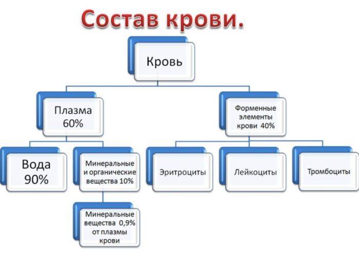 Рис. 3. Состав крови