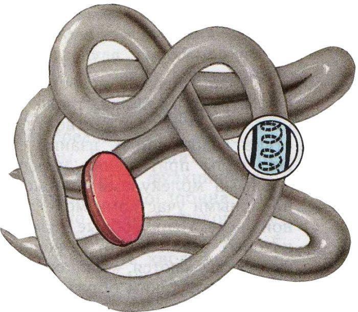 Рис. 4. Глобула