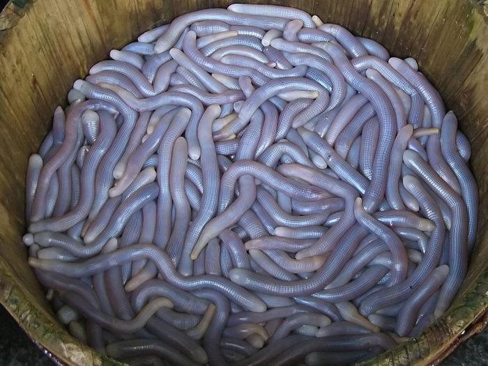 Рис. 4. Сипункулиды на базаре в Гуанчжоу