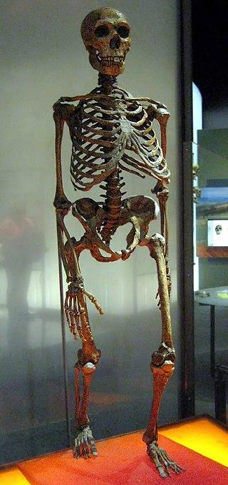 Рис. 5. Скелет неандертальца