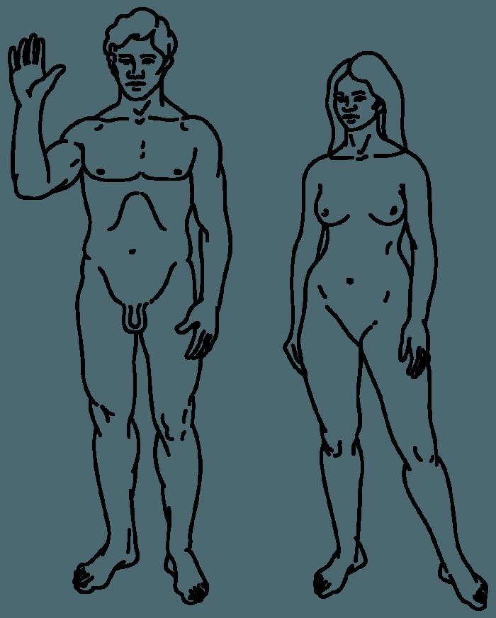 Рис. 6. Изображение мужчины и женщины, исполненное Линдой Саган для пластинки «Пионер», отправленной в космос