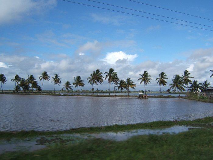 Рис. 6. Трактор на рисовом поле на прибрежном плато Гайаны