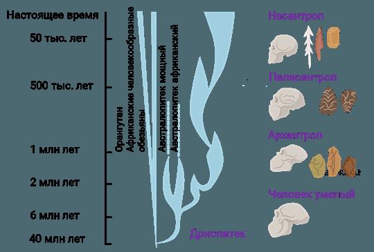 Рис. 3. Эволюция биосферы