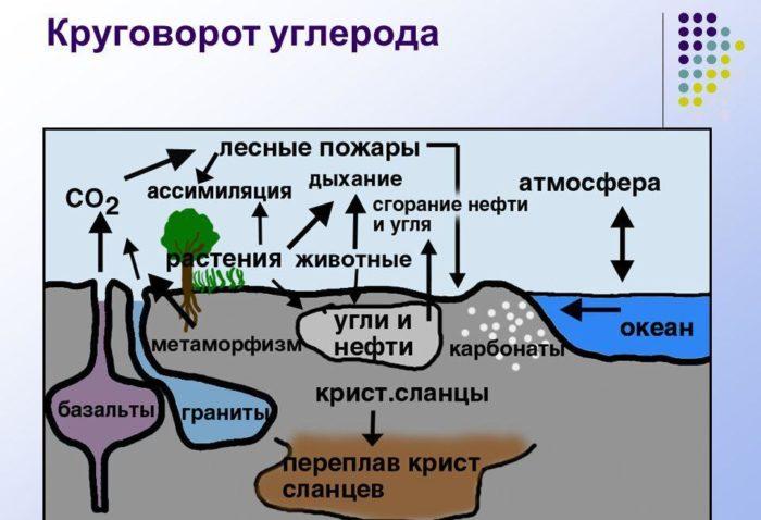 Рис. 4. Круговорот углерода в природе